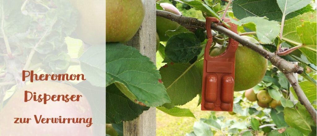 Blog-Beitrag: Pheromon-Dispenser